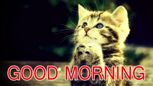 Funny Good Morning Images Wallpaper Pics Pictures HD Download