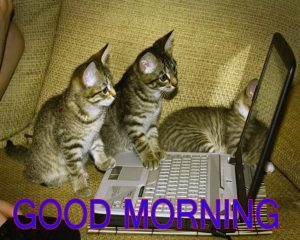 Funny Good Morning Images Wallpaper Pics Free Download