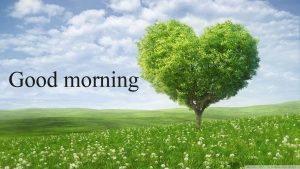 Gud Mrng Pic For Love Couple With Flower Nature Images Wallpaper Pics HD