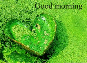 Gud Mrng Pic For Love Couple With Flower Nature Images Wallpaper Pics free Download