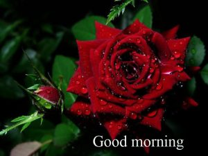 Gud Mrng Pic For Love Couple With Flower Nature Images Wallpaper Pics Download