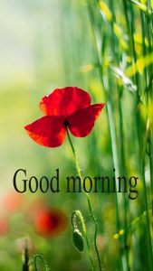 Gud Mrng Pic For Love Couple With Flower Nature Images Wallpaper Pics Download For Facebook