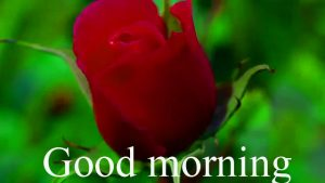 Gud Mrng Pic For Love Couple With Flower Nature Images Wallpaper Pics Photo HD Download