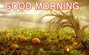 Happy Good Morning Images Wallpaper Pics Free Download