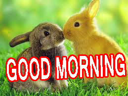 Happy Good Morning Images Wallpaper Pics Photo HD Download