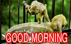 Funny Good Morning Images Wallpaper Pics Photo HD For Whatsapp