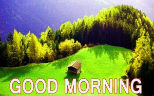 Latest good morning images Photo Pictures Free HD