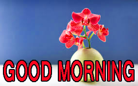 Latest good morning images Photo Pictures HD Download