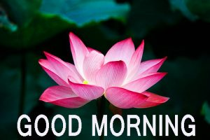 Latest good morning images Wallpaper Pics Free Download