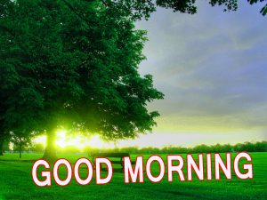 Latest good morning images Wallpaper Pics HD Download
