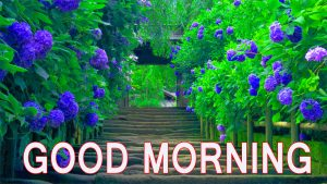 Latest good morning images Wallpaper Pics Photo Free Download