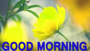 Latest good morning images Wallpaper Pics HD