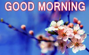 Latest good morning images Wallpaper Pics Photo Download