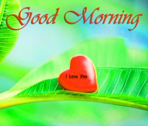 Love Good Morning Images Wallpaper Photo Free HD