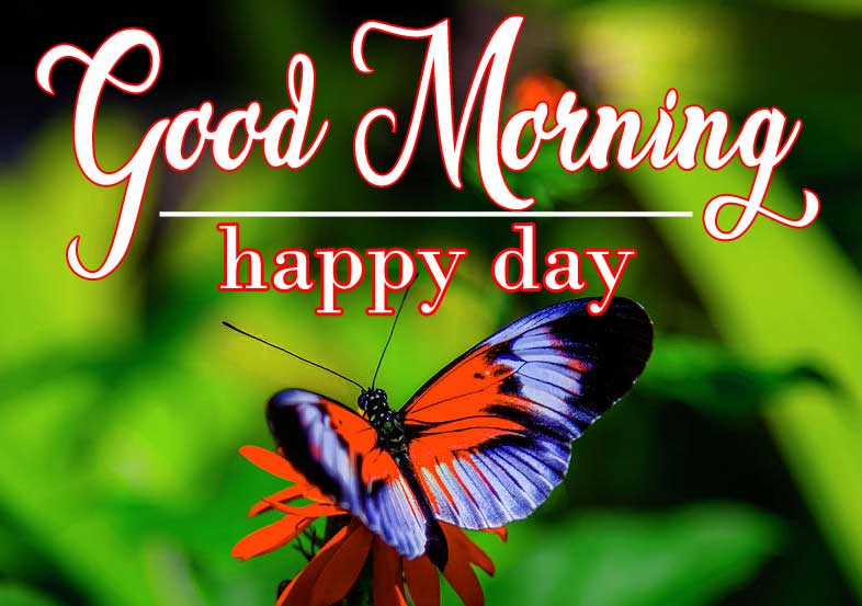 Butterfly-Good-Morning-4