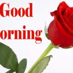 235+ Good Morning Images Wallpaper for Whatsapp Download His