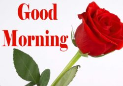 Good-Morning-Images-5