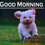 442+ Good Morning Images Photo Pic HD Download With puppy