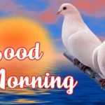 235+ Good Morning Images With Love HD Download