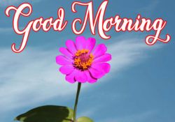 good-morning-Images-53
