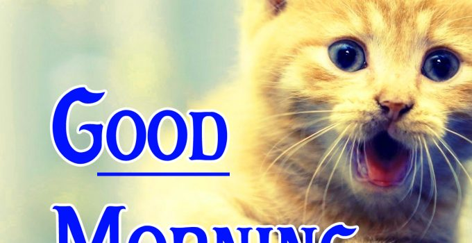 Animal Good Morning Images