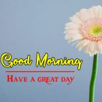 Flower Good Moning Wishes Wallpaper New Download