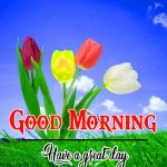 Flower Good Moning Wishes Pictures Download