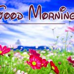 Flower Good Moning Wishes Pics Download Free