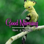 Natures Good Morning Images