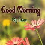 Free New Flower Good Moning Wishes Images Download