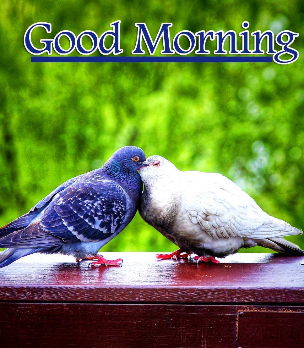 New Best Love Couple Good Morning Wishes Images Pics Latest