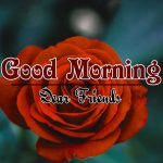 Free Rose HD Good Morning Wishes Images