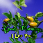 HD Good Morning Wishes Photo New Download