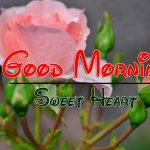 Rose Best HD Good Morning Wishes Pics Download