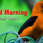 bird good morning images photo pictures hd download free