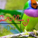 bird good morning images pictures free download