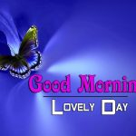 butterfly good morning images photo download