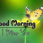butterfly good morning images photo hd