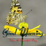 butterfly good morning images photo pics download