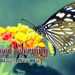 butterfly good morning images photo pics hd download