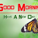 butterfly good morning images pics photo hd