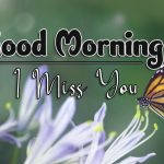 butterfly good morning images wallpaper free hd
