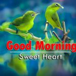 latest good morning images pictures free hd