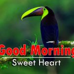 latest good morning images wallpaper hd