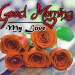 latest rose Good Morning Images photo free download