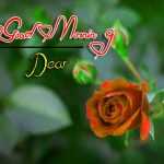 latest rose Good Morning Images pics free hd