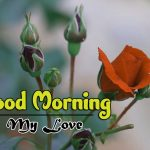 latest rose Good Morning Images pictures download