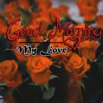 latest rose Good Morning Images pictures hd