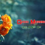 latest rose Good Morning Images wallpaper hd