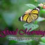new butterfly good morning images photo hd